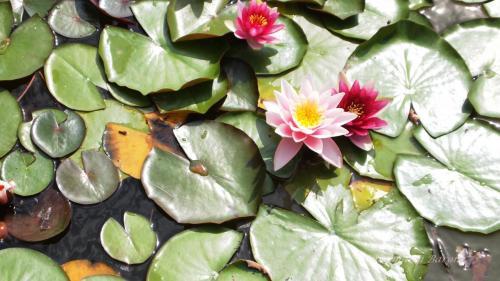 Dell'acqua e dei fiori