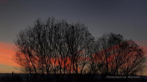del tramonto impigliato ai rami